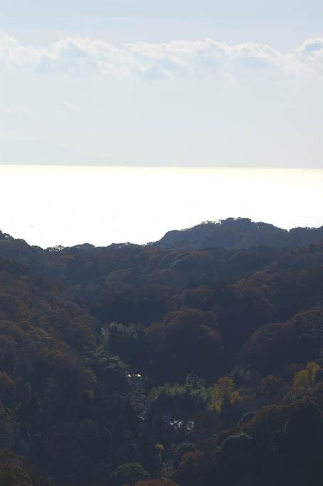 晩秋の名残り(六国見山)と冬の装い(江ノ島ライトアップ)_c0014967_85755.jpg