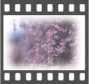 b0020911_17595580.jpg