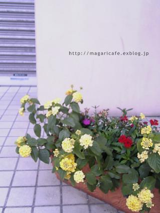 f0006745_1585642.jpg