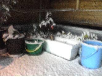 雪だ・雪だ。_c0035904_23174595.jpg