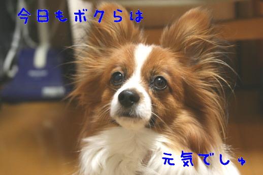 d0013149_047322.jpg