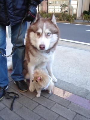 犬を買う_a0037910_207298.jpg