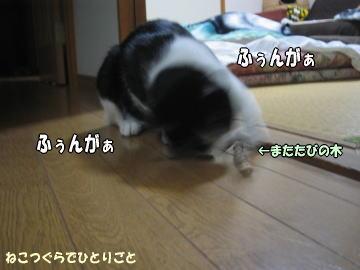 b0041182_953084.jpg
