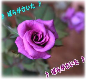 f0013727_2346367.jpg