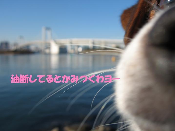 f0020777_052940.jpg