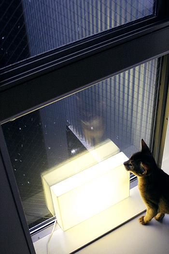 [猫的]雪リターンズ_e0090124_17222459.jpg
