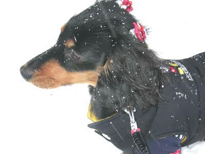 ちょっと寒くなってきた