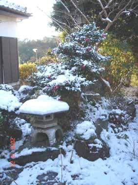 温暖の静岡_e0033609_1412526.jpg