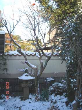 温暖の静岡_e0033609_143171.jpg