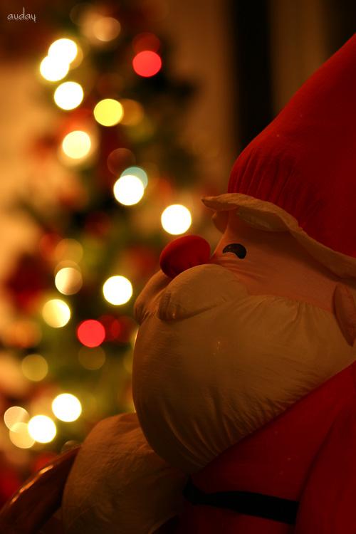 White Christmas ・・・☆_c0048494_053453.jpg