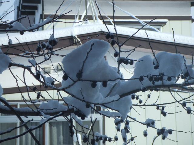 何十年かぶりの大雪が降った降った!_e0012815_136291.jpg