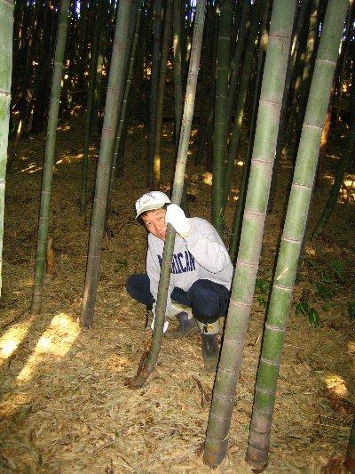 Log Jizo Festival【秋】焼き芋_c0038619_013971.jpg