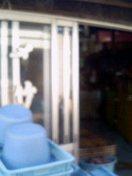 d0057733_1556474.jpg