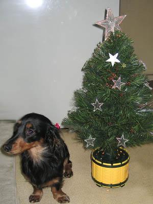 クリスマスツリーってなに?