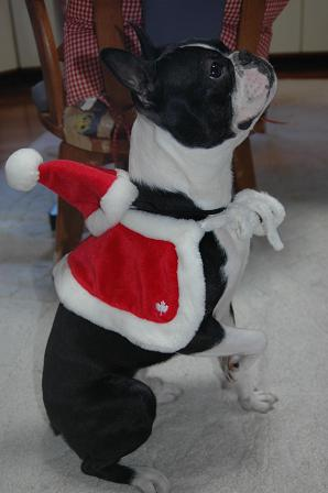 Merry Christmas_d0003977_1985118.jpg