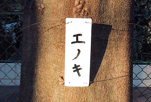 エノキ_b0057679_1022152.jpg