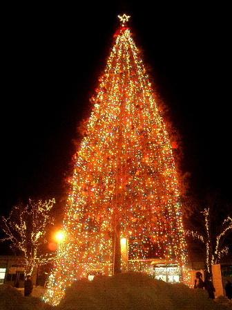 One more Christmas_d0006718_03783.jpg
