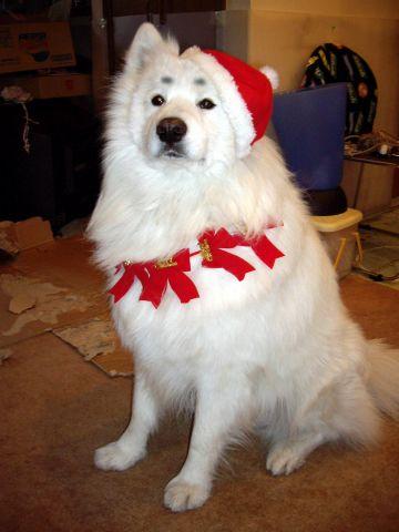 麻呂のクリスマス_c0062832_15425179.jpg