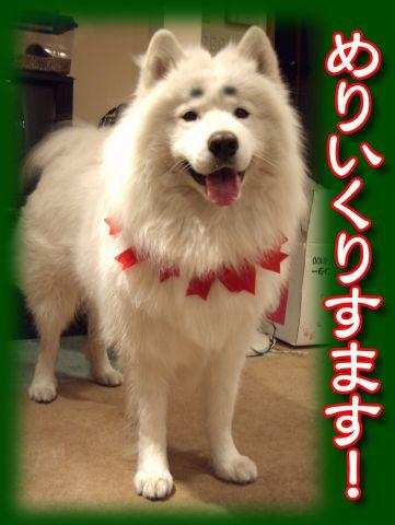 麻呂のクリスマス_c0062832_1550611.jpg