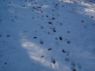 雪の茶臼山_d0055236_23392772.jpg