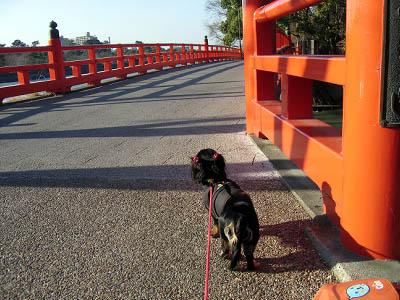橋の上は怖い