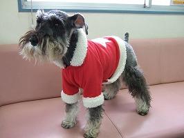 メリークリスマス!_b0059154_2137245.jpg