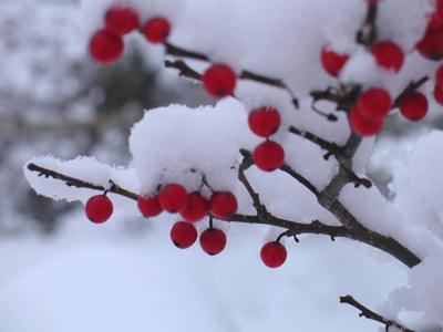 ホワイト・クリスマス_e0084756_9323890.jpg