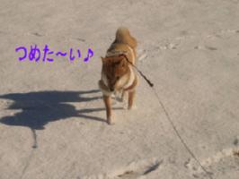 e0077157_16563625.jpg