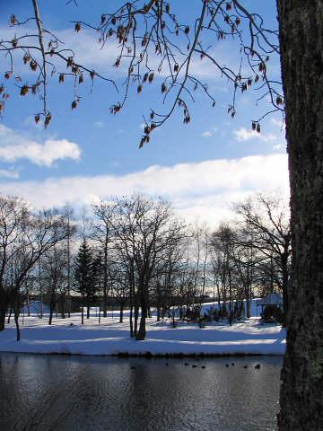 12月26日(月):昼から暴風雪_e0062415_17472193.jpg