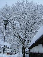 2005年12月26日(月) 曇りのち雪・-1℃_a0024488_8231029.jpg