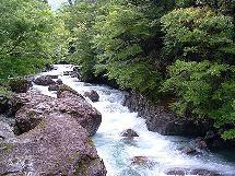 長伐期の近自然林施業を提案したい_a0051128_6334635.jpg