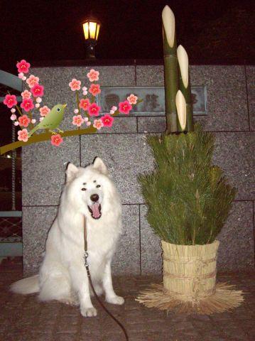 麻呂、お正月を想う_c0062832_139376.jpg