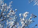 2005年12月27日(火) 曇り・-1℃_a0024488_1335815.jpg