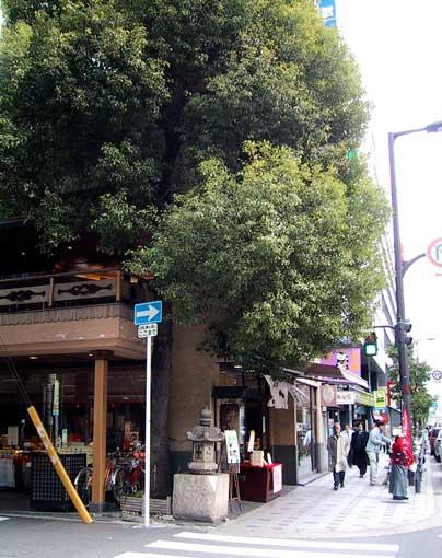 おおきな木の下で_b0057679_9143499.jpg