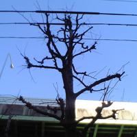 c0068783_14505976.jpg