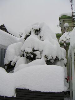 2日続きの雪_c0025115_158399.jpg