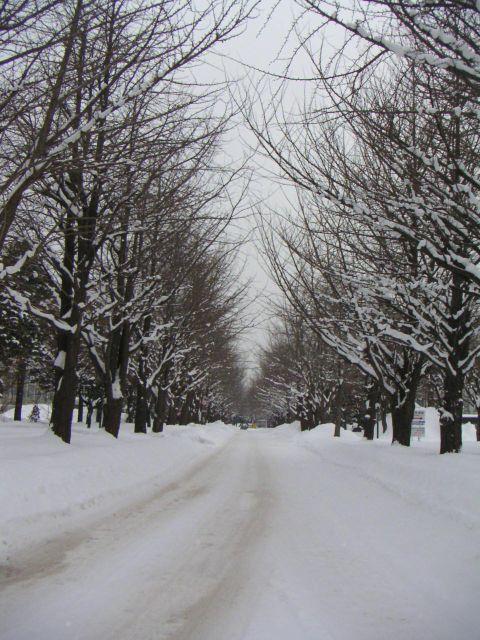1月2日のイチョウ並木と謎の幻日_c0025115_1352176.jpg