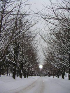 1月2日のイチョウ並木と謎の幻日_c0025115_138159.jpg