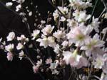 一足早い桜が咲いて・・・_d0026905_19401338.jpg