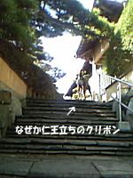 e0027529_1583834.jpg