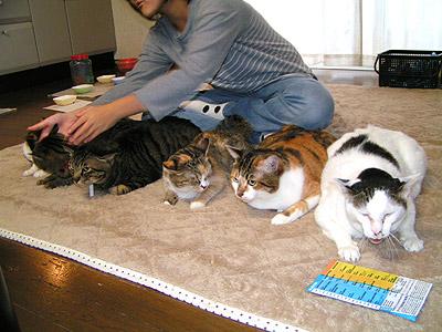 猫ドラム隊FLASH!_a0028451_18134997.jpg