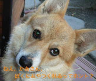b0025633_1644639.jpg