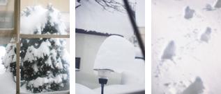 *雪の仕業*_f0032814_16381144.jpg