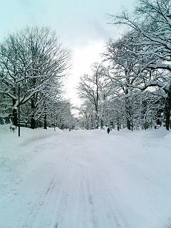 雪雪雪_e0075356_21254685.jpg