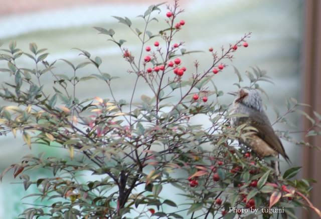 花と鳥_f0037633_14442085.jpg