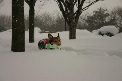 雪降れば アウトドアなり 公園も_b0031538_19223266.jpg