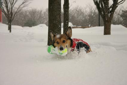雪降れば アウトドアなり 公園も_b0031538_19255988.jpg