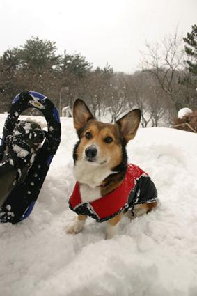 雪降れば アウトドアなり 公園も_b0031538_19285028.jpg