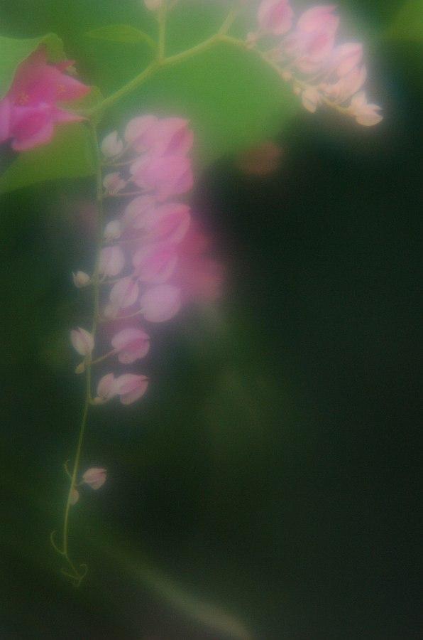 d0027803_83275.jpg