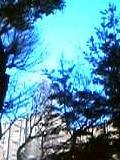 b0020812_1348436.jpg
